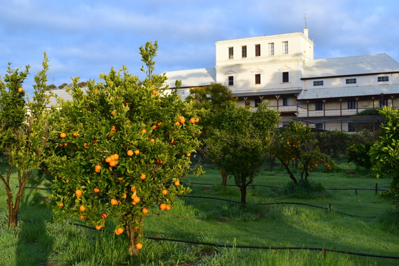 160821-10-Monastery-orchard-New-Norcia